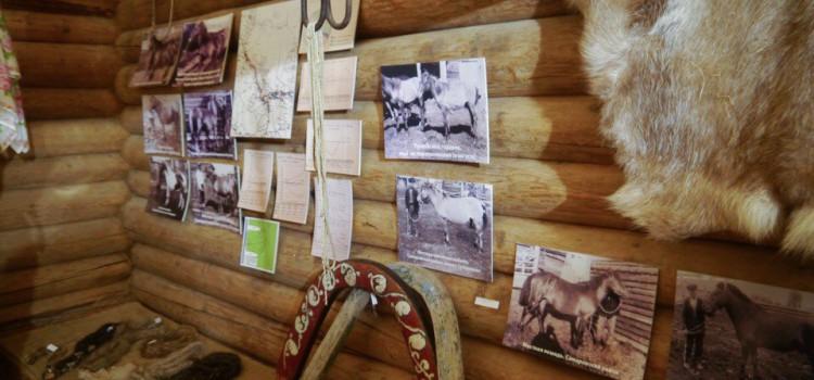 В музее «Торум Маа» открыт  выставочный проект  «Приобская лошадь»